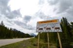 Caribou sign