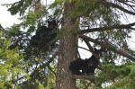 4 BB Cubs